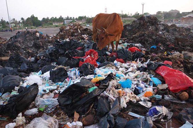 Chất thải nguy hại ảnh hưởng lớn đến môi trường và hệ sinh thái