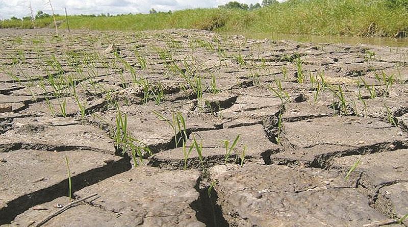 Ảnh hưởng của biến đổi khí hậu đến nông nghiệp