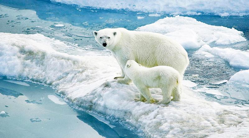 Hậu quả của biến đổi môi trường làm băng tan nhanh hơn