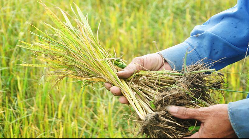 Hậu quả của biến đổi môi trường làm suy giảm năng suất nông nghiệp
