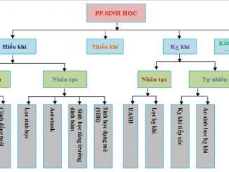 Các phương pháp xử lý nước thải bằng công nghệ sinh học